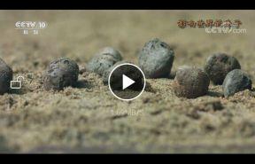 专题片《影响世界的珠子》